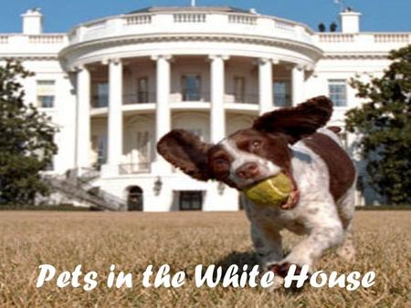 Pets in the White House. Are you interested in animals? Well if so this is the right web quest for you. Did you know that most of the Presidents of the.