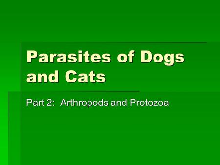 Parasites of Dogs and Cats Part 2: Arthropods and Protozoa.