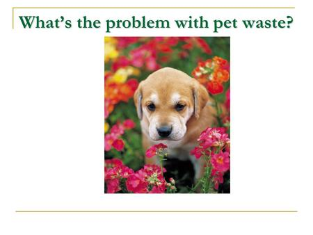 What's the problem with pet waste?.  It's a health risk to pets and people, especially children.  Pet waste is full of bacteria that can make people.