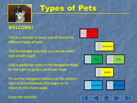 Types of Pets WELCOME! This is a module to teach you all about the different types of pets. This knowledge may help you decide which type of pet to get.