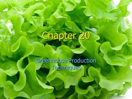 Chapter 20 Greenhouse Production Techniques. The production of greenhouse crops can be compare to the manufacture of non- plant items in one way: scheduling.