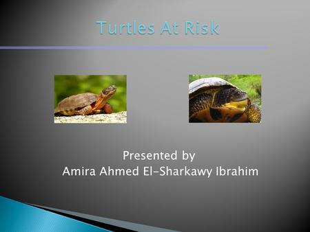 Presented by Amira Ahmed El-Sharkawy Ibrahim.  There are six of eight turtle species in Ontario are listed as endangered, threatened or of special concern.