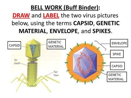 BELL WORK (Buff Binder): DRAW and LABEL the two virus pictures below, using the terms CAPSID, GENETIC MATERIAL, ENVELOPE, and SPIKES. GENETIC MATERIAL.