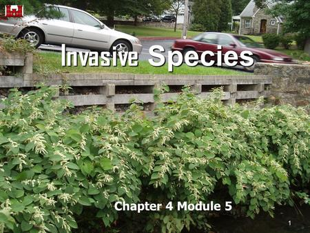 Invasive Species Chapter 4 Module 5 1. Invasive Species What are they? 1) non-native (or alien) to the ecosystem under consideration and 2) whose introduction.