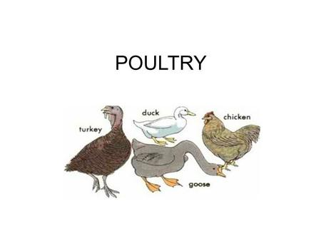 POULTRY.