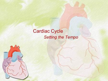 Cardiac Cycle Setting the Tempo. Cardiac Cycle – Overview Events of each heartbeat –Highly coordinated so that both atria contract together and then both.
