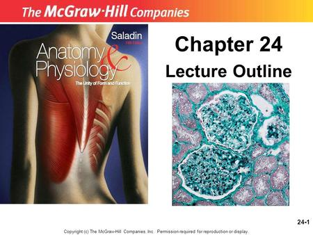 Chapter 24 Lecture Outline Copyright (c) The McGraw-Hill Companies, Inc. Permission required for reproduction or display. 24-1.