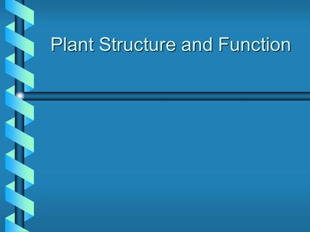 Plant Structure and Function. Is It a Stem, Leaf, Root, Flower, Fruit or Seed? Fruit/Vegetable Part of Plant Broccoli Cabbage Carrot Celery Stalk Corn.