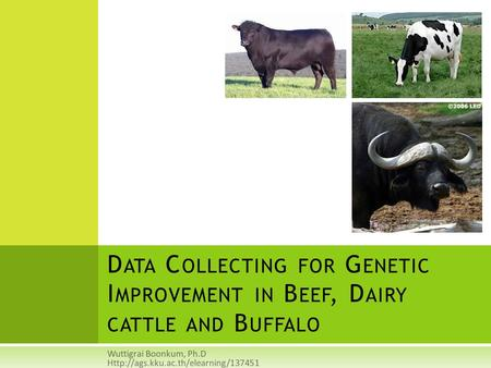 Wuttigrai Boonkum, Ph.D Http://ags.kku.ac.th/elearning/137451 Data Collecting for Genetic Improvement in Beef, Dairy cattle and Buffalo Wuttigrai Boonkum,