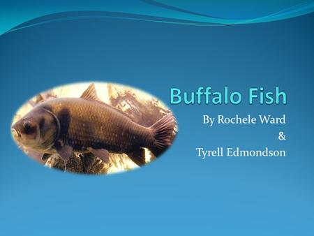 By Rochele Ward & Tyrell Edmondson. Names Common name is: Buffalo Fish Scientific name is: Ictiobus Cyprinellus.
