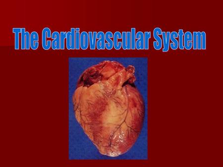The Cardiovascular System Heart, blood vessels, blood Heart, blood vessels, blood Function: transportation of O 2, nutrients, cell wastes, and hormones.