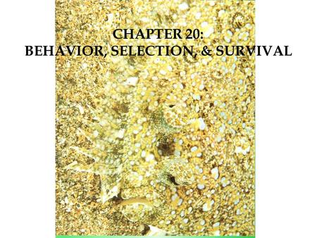 CHAPTER 20: BEHAVIOR, SELECTION, & SURVIVAL. Anthropomorphism – when humans reflect their emotions on to animals Behavior  the way an organism acts What.