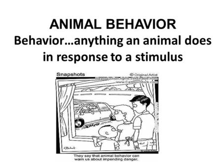 ANIMAL BEHAVIOR Behavior…anything an animal does in response to a stimulus.