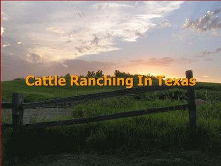 Cattle Ranching In Texas Cattle Trails Vocabulary stockyardChisholm Trail packinghouseWestern Trail cow townGoodnight-Loving Trail round uprustler wranglerchuck.