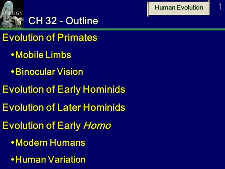 Evolution of Early Hominids Evolution of Later Hominids
