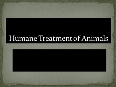 animal abuse thesis