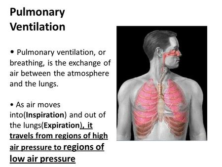 Pulmonary Ventilation Pulmonary ventilation, or breathing, is the exchange of air between the atmosphere and the lungs. As air moves into(Inspiration)