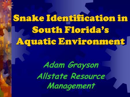 Snake Identification in South Florida's Aquatic Environment