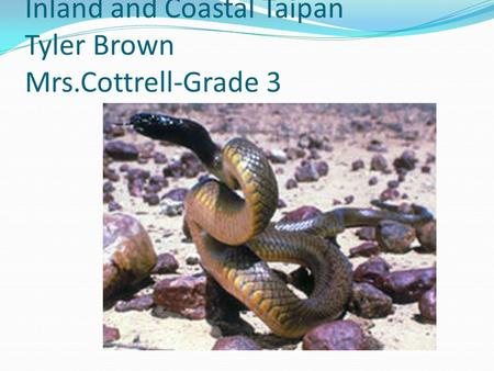 Inland and Coastal Taipan Tyler Brown Mrs.Cottrell-Grade 3.