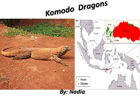 Komodo Dragons By: Nadia.