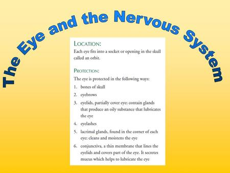 The Eye and the Nervous System