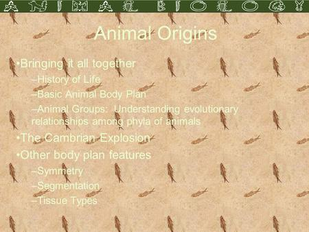 Animal Origins Bringing it all together –History of Life –Basic Animal Body Plan –Animal Groups: Understanding evolutionary relationships among phyla of.
