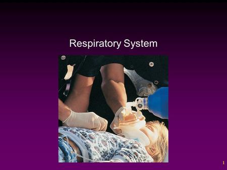 1 Respiratory System. 2 Outline The Respiratory Tract – The Nose – The Pharynx – The Larynx – The Bronchial Tree – The Lungs Gas Exchange Mechanisms of.