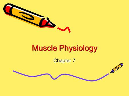 Muscle Physiology Chapter 7. Skeletal Muscle Tissue Striated Elongated Fibers Voluntary Nervous Control Located Near Bones.