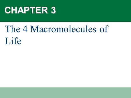 What Are the Four Macromolecules of Life?