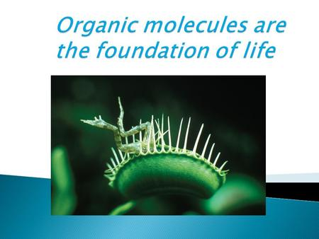 Organic molecules are the foundation of life