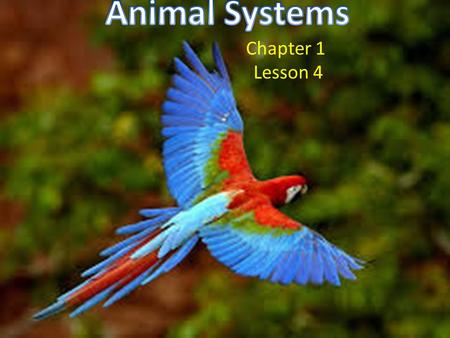 Animal Systems Chapter 1 Lesson 4.
