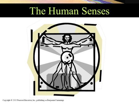 Copyright © 2005 Pearson Education, Inc., publishing as Benjamin Cummings The Human Senses.