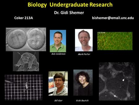 Bob Goldstein Mark Peifer Bill KierVicki Bautch Biology Undergraduate Research Dr. Gidi Shemer Coker