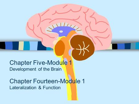 Chapter Five-Module 1 Development of the Brain Chapter Fourteen-Module 1 Lateralization & Function.