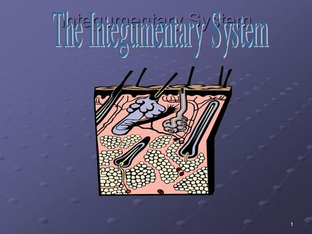 1 Integumentary System. 2 Objectives Name the parts of the Integumentary system and discuss the function of each part.