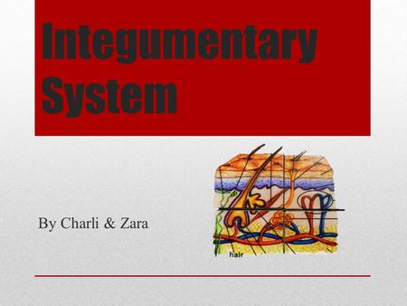 Integumentary System By Charli & Zara. Contents Elements of the System How the system works Diseases & Disorders Importance of the System Cells Cancers.
