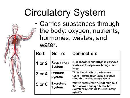 Circulatory System Carries substances through the body: oxygen, nutrients, hormones, wastes, and water. Roll:Go To:Connection: 1 or 2 Respiratory System.