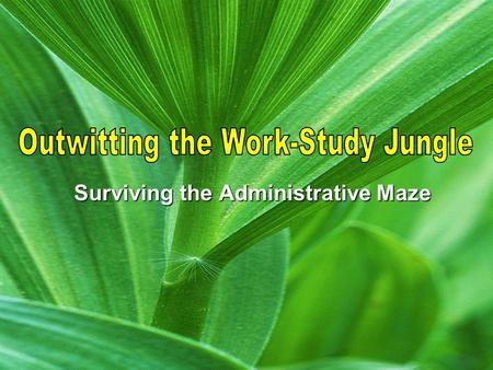 Surviving the Administrative Maze. Presenters Moderator:Sheila Bauer, Coordinator, UMKC Panel:Kyla McCarty Financial Aid Director College of the Ozarks.