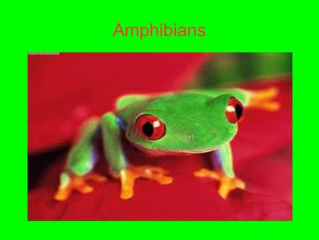 Amphibians. Characteristics Amphibians are frogs, salamanders, and caecilian. Amphibians vary greatly but have a few common traits. Amphibians have moist.