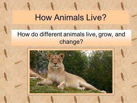 How Animals Live? How do different animals live, grow, and change?
