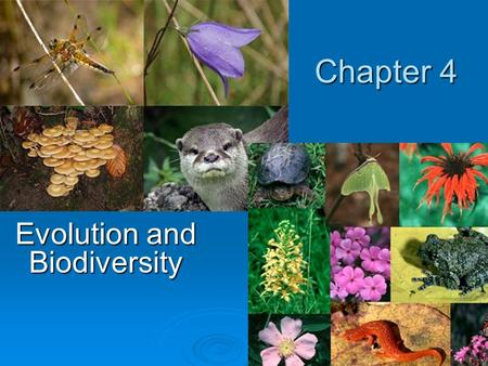 Chapter 4 Evolution and Biodiversity. Chapter Overview Questions  How do scientists account for the development of life on earth?  What is biological.