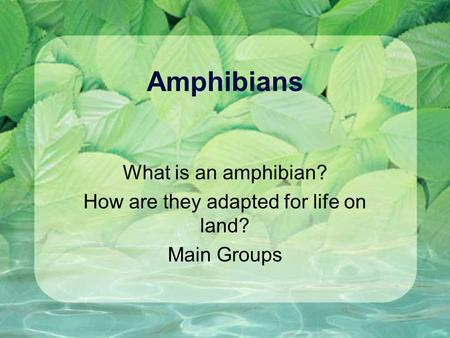 Amphibians What is an amphibian? How are they adapted for life on land? Main Groups.