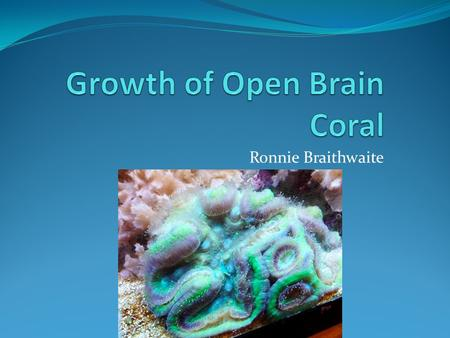 Ronnie Braithwaite. Focus of Research The project explored the effect that feeding has on the growth of the open brain coral Other characteristics of.