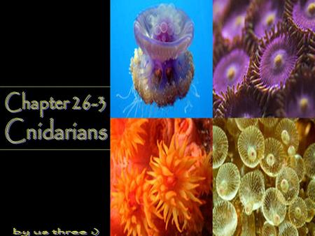 Chapter 26-3 Cnidarians by us three :).