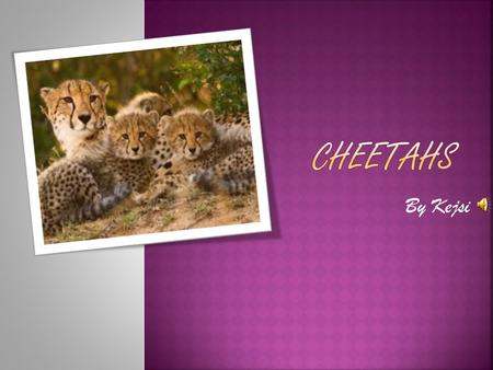 By Kejsi  Cheetahs are tan and have black spots.