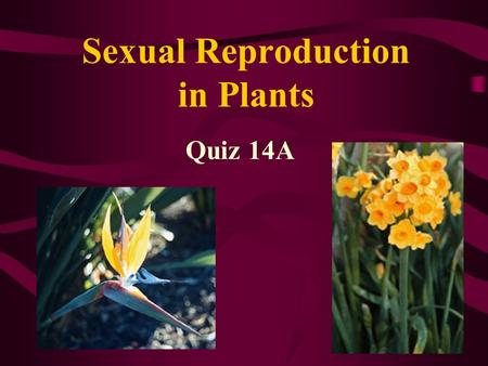 Sexual Reproduction in Plants Quiz 14A. Genesis 1:11-13 11 Then God said, Let the earth bring forth grass, the herb that yields seed, and the fruit tree.