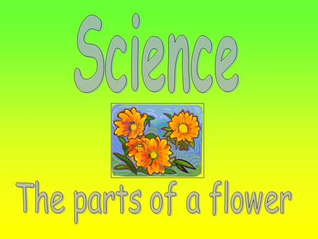 We will learn that plants produce flowers which have male and female organs. We will learn that seeds are formed when pollen from the male organ fertilizes.