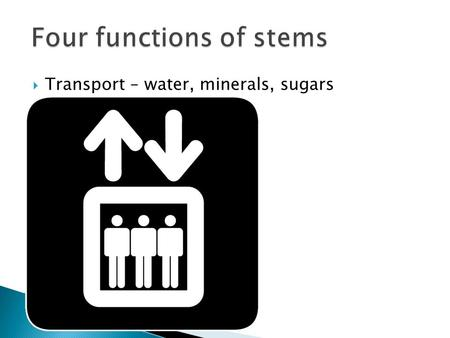Four functions of stems