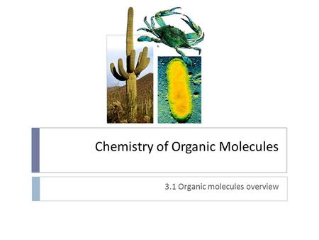 Chemistry of Organic Molecules 3.1 Organic molecules overview.