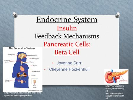Endocrine System Insulin Feedback Mechanisms Pancreatic Cells: Beta Cell Jovonne Carr Cheyenne Hockenhull  system-exerciser-perspective/